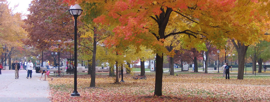 Diag in the Fall