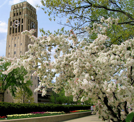 University of Michigan Bell Tower
